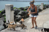 Wanda Belaval, 63, feeds the stray cats wet food that she bought out of her own pocket.