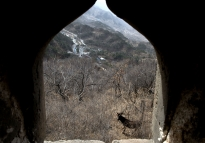 A donkey grazes on a hillside at The Great Wall of China near Beijing.